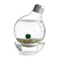 MARIMO MOSS BALL LIGHT BULB TERRARIUM