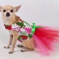 Christmas Trees Tutu Harness Dog Dress  Featured in by KOCouture