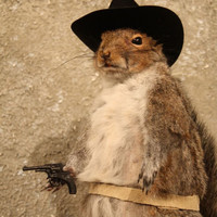 #6901 Cowboy Grey Squirrel Novelty Taxidermy Mount |Red|Fox|Chipmunk|Gift| | eBay