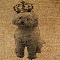 Fluffy Shaggy White Bichon Frise Puppy Dog with Crown by Graphique