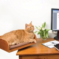Desktop Cat Seat
