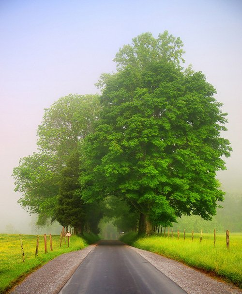 Green Sky Blue Tree Road Dream Pretty Beautiful Summer Sunshine - PicShip on we heart it / visual bookmark #18068180