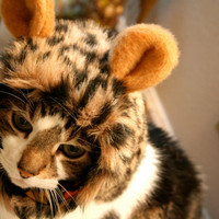 Leopard Hat for Cats by Nestasnest on Etsy