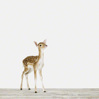 Baby Deer | Sharon Montrose | The Animal Print Shop | Baby Animal Photography Prints