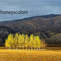 Fine Art Photography - Trees Landscape - Print - Nature Home Decor - 20 x 40