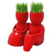 New Red Lover Acacia Grass Hair Man Plant -Red