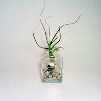 Air Plant Terrarium, Glass Air Plant holder, Glass Beads, Tillandsia