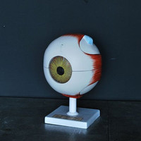 Large Hand Painted Eye