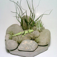 Air Plant Terrarium, Stone Air Plant Holder, Rock Tillandsia Holder, Rock Garden, Desert, Lizard