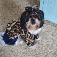 Diva Leopard print Dog shirt and Jeans with matching hairbow size medium