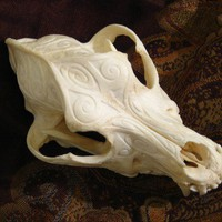 Engraved Dog Skull  Real Bone Curio for Cabinet by MorningstarHall