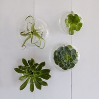 Shane Powers Glass Wall Planters | west elm