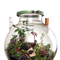 72 liter biodome by MacNettlesDesign on Etsy