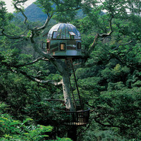 11 amazing treehouses  - MSN Real Estate