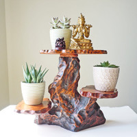 $200.00 Vintage natural wood tree trunk plant stand by localevintage