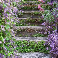 Garden Inspirations / imgfave - amazing and inspiring images
