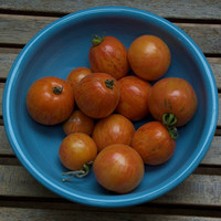 Elberta Peach Tomato Seeds Organically Grown by cubits on Etsy