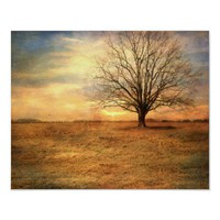 Lonely Tree at Sunset Landscape Fine Art Print from Zazzle.com