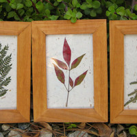 Framed Pressed Leaves Trio Textured White by TerraCasa on Etsy