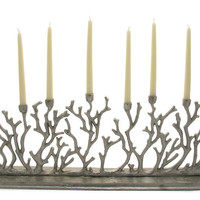 Great Barrier Reef Candelabra | Lafayette  Rushford