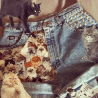 Crazy Cat Hipster Studded High Waist shorts