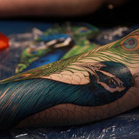large peacock leg piece