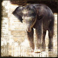 Vintage Style Baby Elephant Print Sepia Nature by galleryzooart