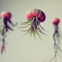 3 OMBRE Jellyfish Air Plant // Hot Pink // Sea by PetitBeast