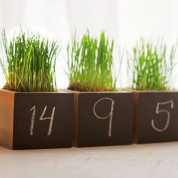 Blackboard Wheatgrass Planter Cubes Set of by andrewsreclaimed