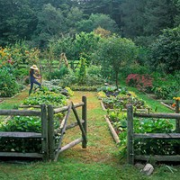 Garden / Organic  Vegetable Herb Garden