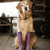 Cute Animals / golden retrievers, cute animals, brown dress with white dots tumblr