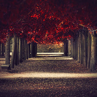 Red colors of autumn surreal photo red trees by behindmyblueeyes