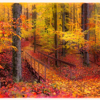 Autumn footbridge, 8x10, Fine Art photograph, Fall decor, autumn, nature decor, woodlands, trees, hiking trails