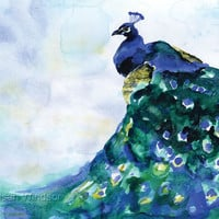 Peacock Watercolor Painting Blue Bird Giclee Print 11 x 14