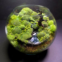 Bubble Moss Bonsai - Fantasy Terrarium #terrarium