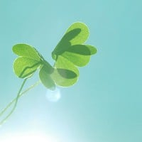 Shamrock photograph saint patricks day spring by dullbluelight