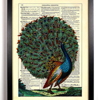 The Proud Peacock Repurposed Book Upcycled Dictionary Art Vintage Book Print Recycled Vintage Dictionary Page Buy 2 Get 1 FREE