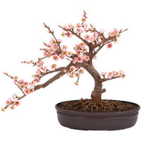 Walmart: Cherry Blossom Bonsai Silk Tree