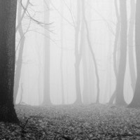 Forest in fog Wall Mural | Eazywallz