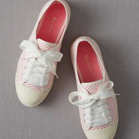 Spotty Canvas Plimsolls