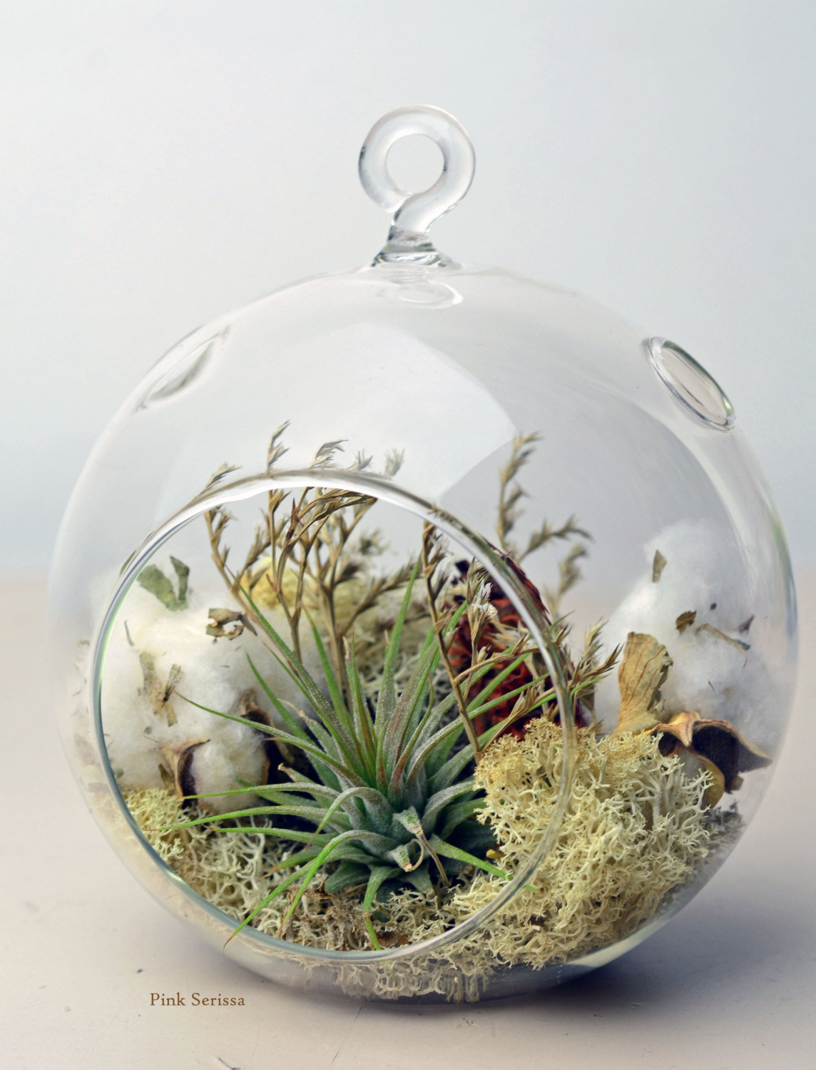 Air Plant Terrarium Hanging Glass Orb From PinkSerissa