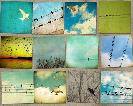 SALE Super Special Set of 12 Large Bird Prints by bomobob