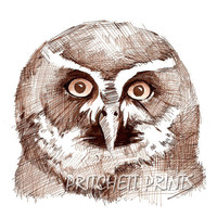 Pen and Ink Owl Drawing - Sepia Spectacled Owl