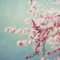 Pink Flowering Tree Photography pastel spring wall by MaleahTorney