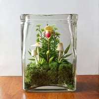 Tiny Lady Slipper Orchid Terrarium in Repurposed Vase
