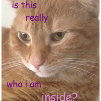 "Existential Thinking Cat ""is this really who i am inside"" Matte Sticker 3"" x 4"" Comic Sans and Rounded Edges"