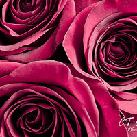 Feature of the Week, 50% Off, Rose Print, 8x12 inch, Red wall decor