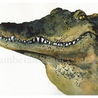 Looker  alligator art alligator watercolor by amberalexander