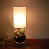 Terrarium/ Display Column Table Lamp