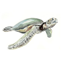 Turtle Original Watercolor painting fine art artwork wall home decor ocean sea animal illustration 13x19